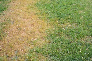 Stopping Brown Grass
