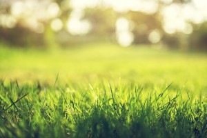 Building a lawn from scratch