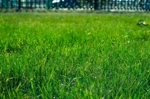 picking the right sod for your lawn