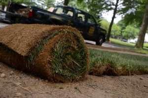 Planting Sod: What You Need to Know to Establish a New Lawn